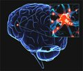 Эндогенный неоваскулогенез в постинсультной репарации мозга