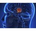 Нормоменс® — современный подход к лечению гиперпролактинемии