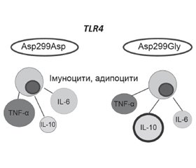 The role of single nucleotide polymorphism TLR4 in the development of the non-alcoholic fatty liver disease in children