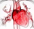 Кардиопротективный образ жизни как базовый компонент немедикаментозной профилактики заболеваний сердечно-сосудистой системы