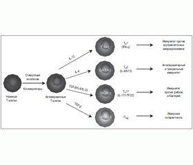Введение в клиническую иммунологию, клинико-лабораторная оценка иммунного статуса (лекция)