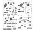 Активированные кислородсодержащие метаболиты организма человека при заболеваниях органов дыхания. Генераторы и генерация (Часть 2)