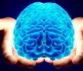 Вырастить мозг — легко!