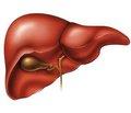 Диагностика и лечение гемангиом печени (научный обзор)