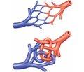 Церебральная гемодинамика упациентов сартериовенозными мальформациями