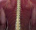 Симптоми травм спинного мозку