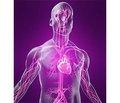 Особенности трансформации нейроциркуляторной дистонии по гипотоническому типу в гипертоническую болезнь
