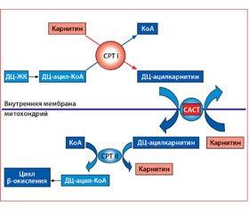 Патогенетический подход к терапии ишемии сердца