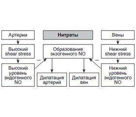 Nitrates in clinical practice