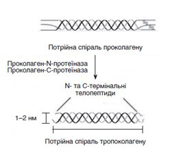 Levels of bone turnover markers (N-terminal propeptide of type I procollagen and carboxy-terminal telopeptide of type I collagen) in Ukrainian population of different age and gender