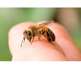 Влияние мелиттина — компонента пчелиного яда — на экспрессию факторов регенерации мышц