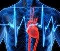 Серцева недостатність зі збереженою фракцією викиду лівого шлуночка