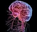 Застосування мануальної медицини в реабілітації дітей із перинатальним ураженням центральної нервової системи