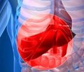 Синдром диспепсії у хворих   на цироз печінки: особливості патогенезу та корекції