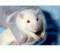 Центральное холиномодулирующее влияние на летальность и степень неврологического дефицита у крыс с черепно-мозговой травмой