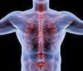 Сучасний погляд на проблему остеопорозу у чоловіків в Україні