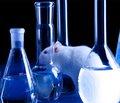 Особливості морфофункціонального стану ендотеліальних клітин окремих зон кори великих півкуль у щурів зі стрептозотоцин-індукованим діабетом за умов ішемічно-реперфузійного пошкодження головного мозку