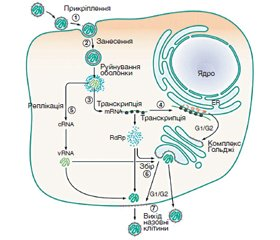Hemorrhagic fever with renal syndrome in Ukraine