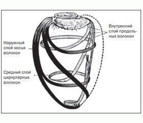 Новый маркер раннего ремоделирования сердца у больных острым инфарктом миокарда с элевацией сегмента ST