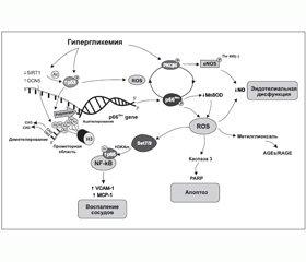 Гликемическая память как патогенетическое основание для формирования алгоритма современной антидиабетической терапии