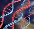 Генетичний поліморфізм ASP299GLY гена  тол-подібного рецептора 4 в дітей із хелікобактерною інфекцією