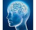 Залежність показників короткострокової пам'яті від ультрадіанних ритмів у пацієнтів із цереброваскулярними захворюваннями