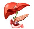 Features of nutritional support in patients with severe acute necrotizing pancreatitis