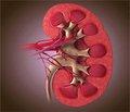 Генетический полиморфизм Toll-подобного рецептора 4 — предиктор склонности к рецидивирующему течению хронического пиелонефрита у детей