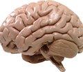 Необратимые структурные изменения головного мозга могут быть вызваны сотрясением