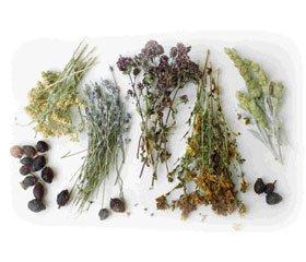 Medicinal Plants in the Flora of Luhansk Region