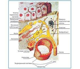 Лимфодренаж — основа биорегуляционного подхода в терапии детских заболеваний