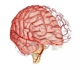 Хвороба дрібних судин головного мозку: сучасна тактика ведення пацієнтів