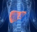 Інтерферон-опосередкована регресія фіброзу під час противірусної терапії хронічного гепатиту С при різних варіантах поліморфізму гена IL28B