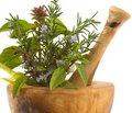 Рациональное использование лекарственных трав при лечении заболеваний, сопровождающихся кашлем