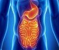 Сосудистые заболевания и тонкий кишечник