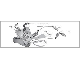 Применение нифуратела в терапии инфекций мочевой системы у гинекологических больных
