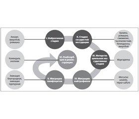 Траумель С: биорегуляционный подход кпротивоболевой терапии заболеваний позвоночника исуставов