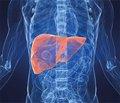 Діагностична значимість сироваткових маркерів фіброзу печінки у хворих на HCV-інфекцію
