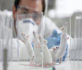 Вплив ендогенних та екзогенного естрогенів на концентрацію С-реактивного білка та рівень автоантитіл у оваріоектомованих щурів із метаболічним синдромом на тлі гіпотиреозу
