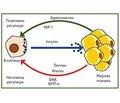 Стеатоз підшлункової залози в дітей. Частина 1. Етіологія, епідеміологія та патогенез