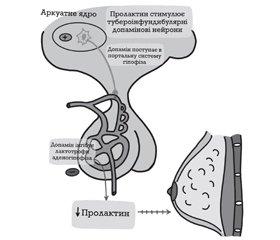 Пролактин, його фізіологічна функція і роль у канцерогенезі молочної залози (огляд літератури)