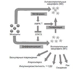 Immune and anti-inflammatory factors in the mechanism of therapeutic effect of metformin in type 2 diabetes mellitus (analytical review including the results of own researches)