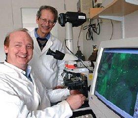 Факторы роста тканей и нервов