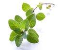 Эффективность растительных экстрактов