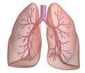 Ранний период туберкулезной инфекции