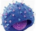 Соматические и неврологические проявления антифосфолипидного синдрома