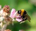 Лечение острых реакций на яд   перепончатокрылых насекомых