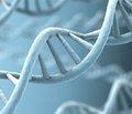 Белок ROR1 служит переключателем в распространении метастазов
