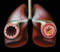 Фармакогенетичні аспекти дезобструктивної терапії нападів бронхіальної астми в школярів