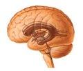 Билобил Интенс в лечении больных  с дисциркуляторной энцефалопатией, обусловленной атеросклерозом и артериальной гипертензией